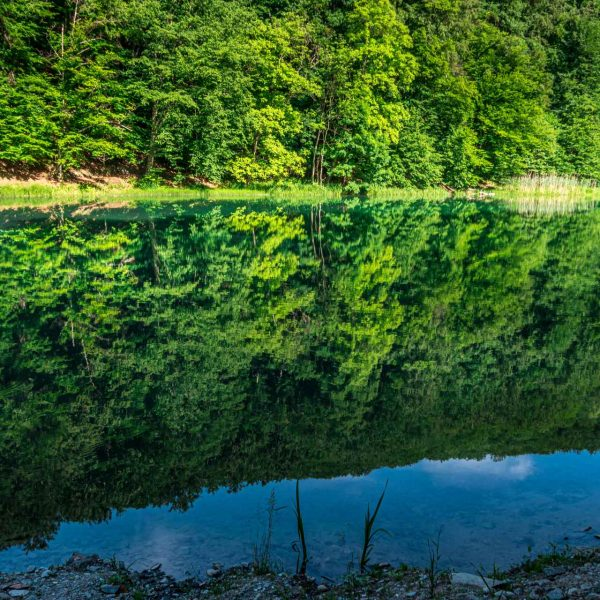Landscape View Of The Artificial Lake. Reflection Of The Forest